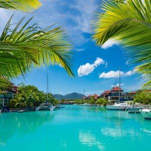 """SC.Mahe.Hafen Blick durch zwei Palmenblätter auf den Hafen """"Eden"""" auf Mahé, Seychellen"""