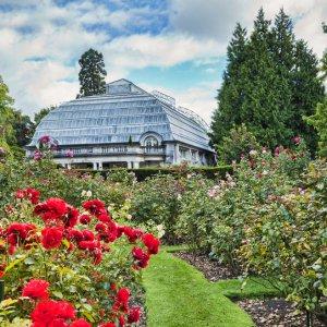NZ.Christchurch_Botanic_Garten Der Blick auf den Rosengarten mit Haus im Hintergrund.