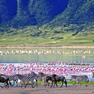 TZ.AR.Ngorongoro Krater Zebras und Flamingos Blick auf eine Zebraherde und viele Flamingos
