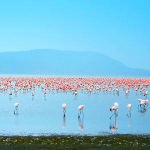 Lake Nakuru.Flamingos Flamingos at Lake Nakuru, Kenya