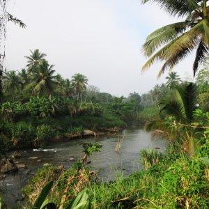 LK.Sinharaja_Forest_Reserve_Fluss Fluss in tropischer Umgebung