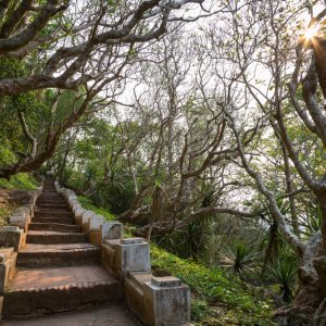 Laos.POI.Mount Phousi Steintreppen 300 Steinstufen für den Aufstieg zum Mount Phousi