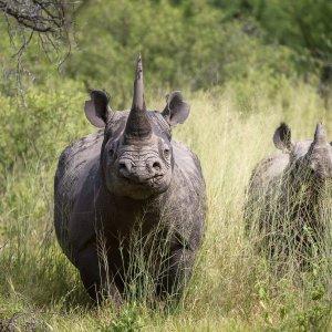 ZA.Kruger Nationalpark