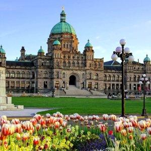 CA.Victoria.Parlament Blick durch ein Tulpenfeld auf das Parlament von Victoria, Kanada