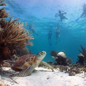 MX.POI.Riviera Maya Unterwasserwelt Eine Meeresschildkröte unter Wasser