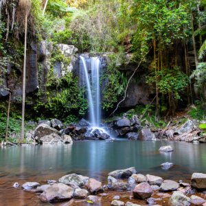 AU.Gold_Coast_Tamborine_Nationalpark Der Blick auf einen Wasserfall im Tamborine Nationalpark.