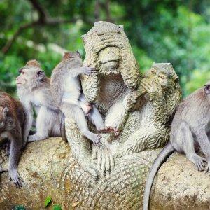 Bali.Monkey_Forest_Ubud_Affen Mandala Wisata Wenara Wana, Monkey Forest Ubud, Affenwald Ubud, Sacred Monkey Forest Sanctuary, Affen