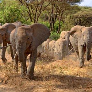 TZ.AR.Lake Manyara Nationalpark Elefanten Eine Elefantenfamilie
