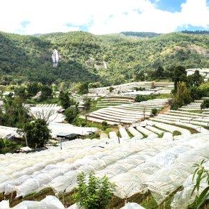 Blick auf die Reisfelder auf dem Weg zum Gipfel des Doi Inthanon in Thailand.