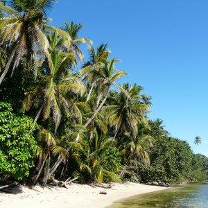 CR.Cahuita Nationalpark Strand Palmenstrand des Cahuita Nationalparks