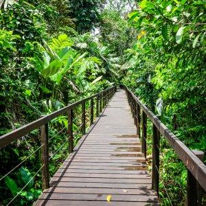 CR.Cahuita Nationalpark Brücke im Dschungel