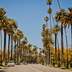 US.POI.Beverly Hills Palmenstraße Blick auf die berühmte Palmenstraße in Beverly Hills