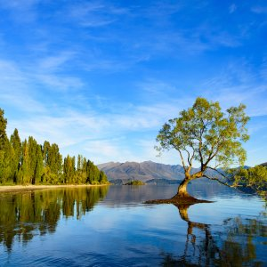 NZ.Wanaka_Tree Der Blick auf einen Baum inmitten des Wanaka Lakes.