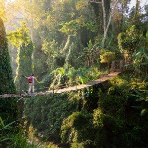 TH.Dschungel Eine Person, die im Dschungel eine Hängebrücke überquert