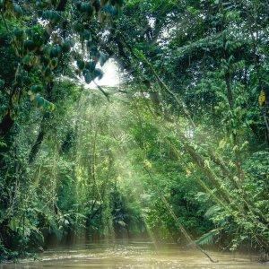 CR.Nationalpark_Tortuguero Costa Rica Tortuguero Nationalpark Regenwald Fluss