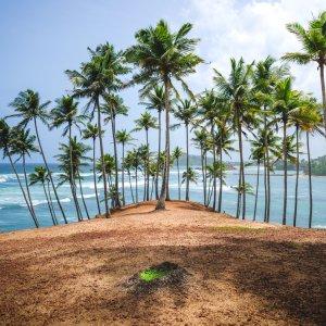 "LK.Mirissa.coconut_tree_hill Der üppig mit Palmen bewachsene rote Erdhügel ""Coconut Tree Hill"" in Mirissa"