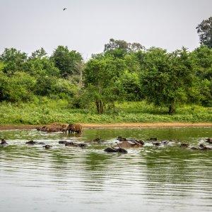 LK.Udawalawe National Park Wasser