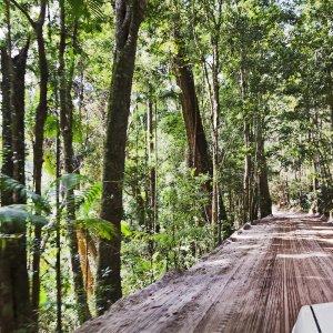 AU.Fraser Island.Jungel Drive 4x4 Tour durch den Dschungel auf Fraser Island