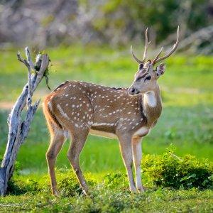 LK.Yala National Park Reh