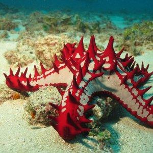 KE.Diani Beach.Unterwasserwelt