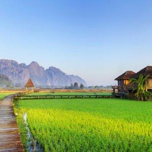 LA.Vang_Vieng_Reisfelder Der Blick auf grüne Reisfelder und Holzwege in der Nähe von Vang Vieng, Laos.
