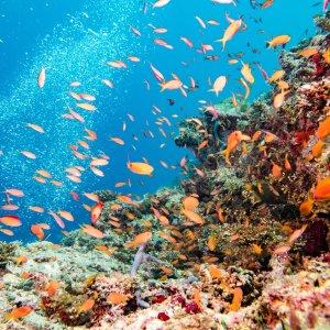 AU.Great Barrier Reef.Reef Viele bunte Fische in einem Riff im Great Barrier Reef.