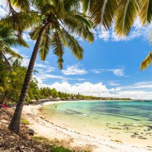 MU.Belle Mare Palmen Palmen vor schöner Strandkulisse am Beach von Bell Mare, Mauritius