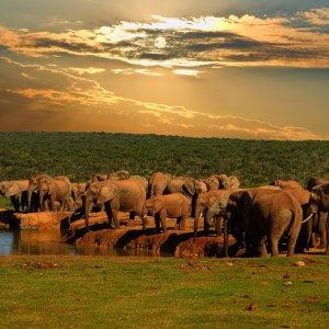ZA.Addo_Elephant_National_Park Elefantenherde an einer Wasserstelle
