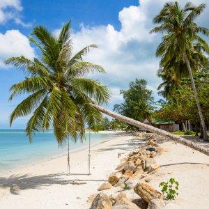 TH.AR.Koh Phangan Strand Palme Ein Strand mit Palmen und einer Schaukel
