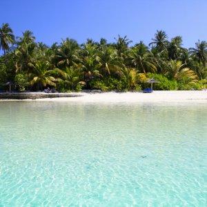 MV.Nord_Ari_Atoll_Insel Weißer Sandstrand mit üppigen Palmen-Bewuchs auf der Insel Ellaidhoo am North Ari Atoll, Malediven