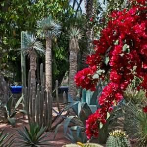 MA.POI.Jardin Majorelle 6 Verschiedene Pflanzen des Jardin Majorelle