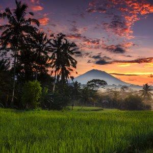 Bali.Ubud Sonnenuntergang in Reislandschaft von Ubud