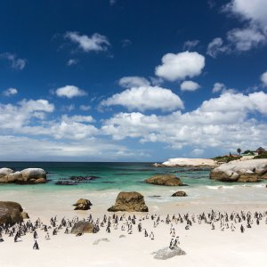 ZA.Boulders_Beach Südafrika Boulders Beach Simons Town False Bay Pinguine Observatory