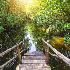 Sansibar.Jozani-Chwaka-Bay-Nationalpark Die Mangrovenwälder des Nationalparks Jozani Chwaka Bay auf Sansibar