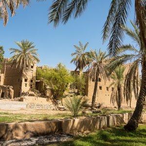 OM.Al_Hamra_Lehmhäuser Alte Lehmhäuser umzingelt von grünen Palmen im alten Dorf von Al Hamra im Oman