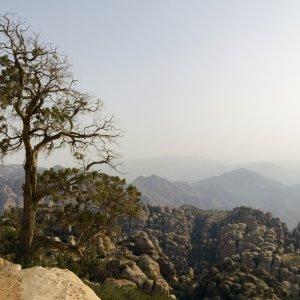 JO.Biosphärenreservat_Dana_Pflanzenwelt Jordanien Biosphärenreservat Dana Naturreservat