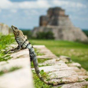 MX.POI.Chichén Itzá 2 Säulen der Ruinenstätte
