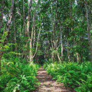 Sansibar.Jozani-Chwaka-Bay-Nationalpark_Wald Die grünen Wälder des Jozani-Chwaka-Bay-Nationalparks auf Sansibar