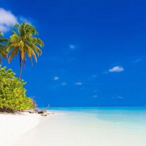 MV.Nord_Ari Atoll_Strand Paradiesische Palmen am weißen Sandstrand vor dem türkisblauem indischen Ozean
