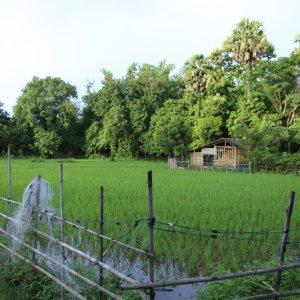 LA.Champasak_Landschaft Der Blick auf ein Reisfeld in der Nähe der Stadt Champasak, Laos.