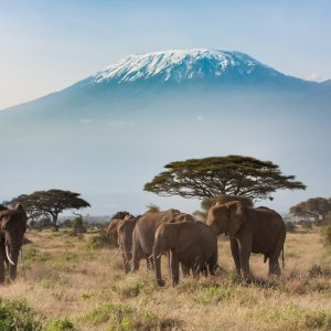 Amboseli NP mit Elefanten und Kilimanjaro