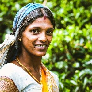 LK.Nuwara Eliya.Frau Tee Teepflückerin in Nuwara Eliya in Sri Lanka