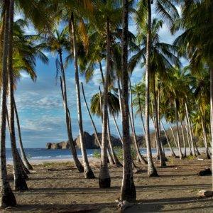 CR.Playa_Samara_Strand Der Blick auf Palmen am Sandstrand mit Meer im Hintergrund.