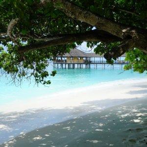 MV.Baa Atoll Strand Blick durch zwei Bäume am weißen Sandstrand von Baa Atoll, Malediven