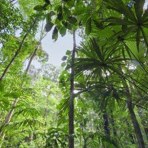CR.Golfo_Dulce_Corcovado_National_Park Costa Rica Golfo Dulce Pazifikküste Dschungel Regenwald Corcovado National Park