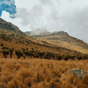Savana Mount Kenia