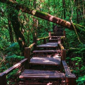 "Naturheilpfad ""Ang Ka Luang Nature Trail"" im Doi Inthanon Nationalpark"