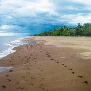 CR.Nationalpark_Tortuguero_Strand Costa Rica Tortuguero Nationalpark Regenwald Strand