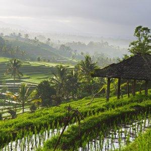 Bali.Ubud.Reisfelder Beeindruckende Reisterassen in Bali