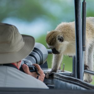 TZ.AR.Tarangire Nationalpark Affe Ein Affe auf einem Safari-Auto